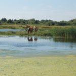 Balade en Henson dans le domaine du Marquenterre et sur la plage du Crotoy