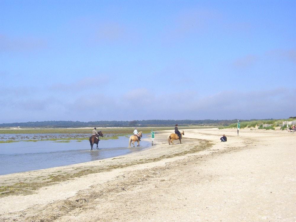 Promenade à cheval sur la plage du Crotoy en Baie de Somme